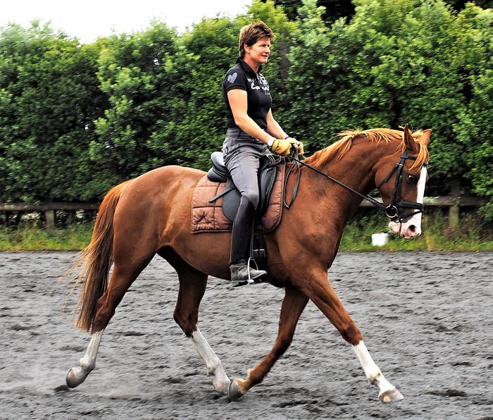 Fledermaus is now working well under saddle, both dressage and jumping, with Jutta.