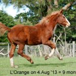 Rebecca Wilson took this picture of L'Orange, on August 4. She also photographed Fire'n Ice and Lilac for us. They are of course in their winter coats but are energetic and active despite the cooler weather.