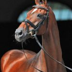 Hanoverian Stallions of the Year – the Vollrath link