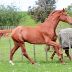 From strength to strength – breeder discount offer