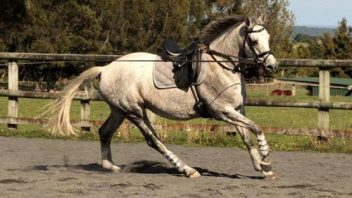 Velvet shaping up a fine dressage prospect