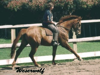 Wesermoon's sire, Weserwolf.