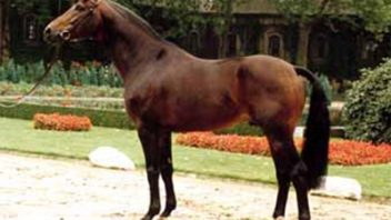 Has performance horse breeding lost its way? An interview with Dr Lehmann