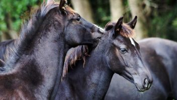 Foal fun time: Lorde and Gunsmoke