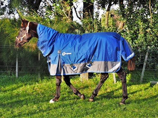 Bond has a new rug to help get him used to the New Zealand winters.